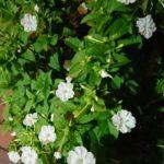 夜中に咲く花たち