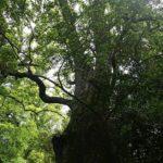 久しぶりに木々に囲まれたい!