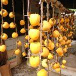 檜原村 干し柿