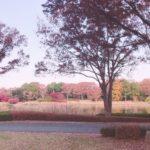 今は紅葉の季節でイチョウが綺麗です。
