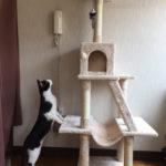 新しいキャットタワー組み立てました。